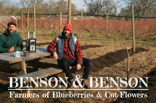 Benson & Benson (Trehane Blueberry PYO) – helping to expand